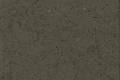 Grey Amazon